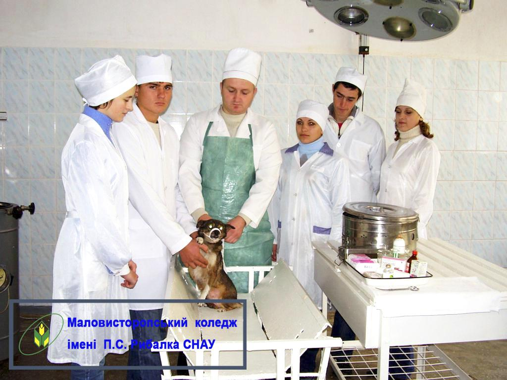 Спеціальність «Ветеринарна медицина»